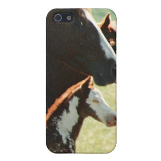 Mare Horses and Foal Picture iPhone SE/5/5s Cover