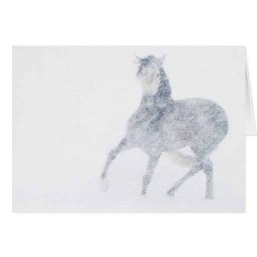 Mare in a Blizzard Horse Greeting Card