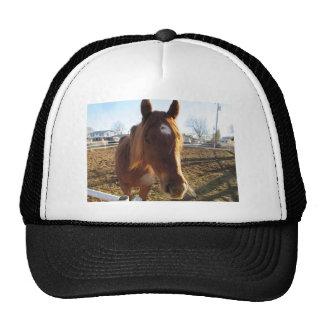 Mare Trucker Hat