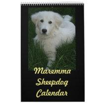 Maremma Sheepdog Calendar