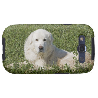 Maremma sheepdog in pasture acts as a livestock samsung galaxy SIII cover
