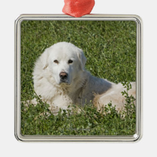 Maremma sheepdog in pasture acts as a livestock metal ornament