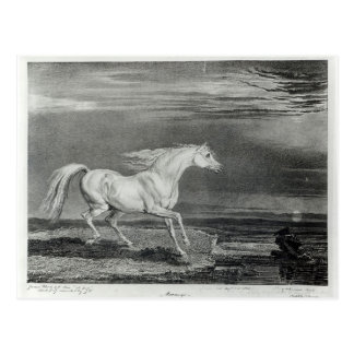 Marengo, engraved by the artist postcard