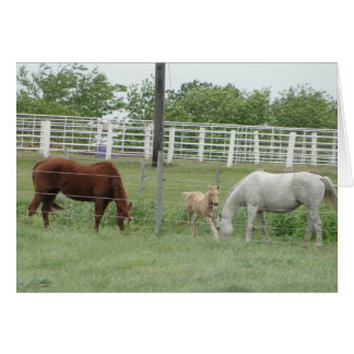 Mares and Foal Greeting Card