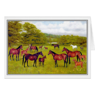 Mares and Foals Card