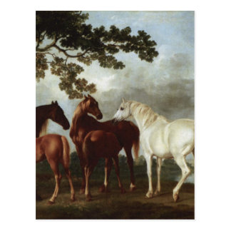 Mares and Foals in a River Landscape George Stubbs Postcard