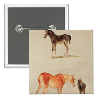 Mares and foals pinback button
