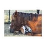 Mare's Love Stretched Canvas Print