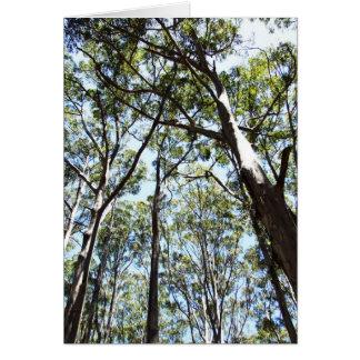 Margaret river Forest Card