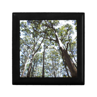 Margaret river Forest Jewelry Box