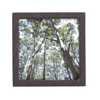 Margaret river Forest Keepsake Box
