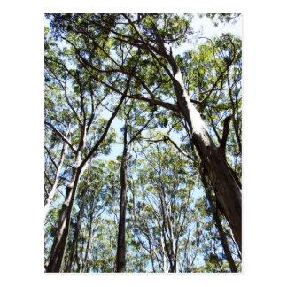 Margaret river Forest Postcard