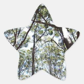Margaret river Forest Star Sticker
