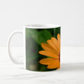 Margarita africana anaranjada taza