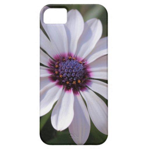 Margarita africana de Osteospermum Funda Para iPhone SE/5/5s