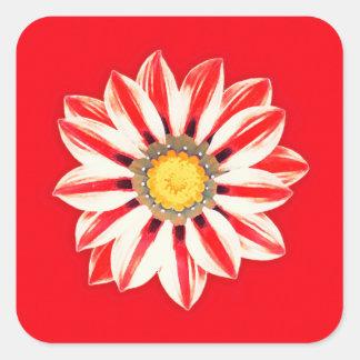 Margarita africana/Gazania - rojo y blanco rayado Calcomanía Cuadradas Personalizada