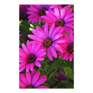 "Margarita africana púrpura folleto 5.5"" x 8.5"""