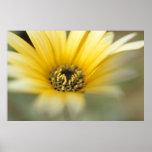 Margarita amarilla de la flor #1 impresiones