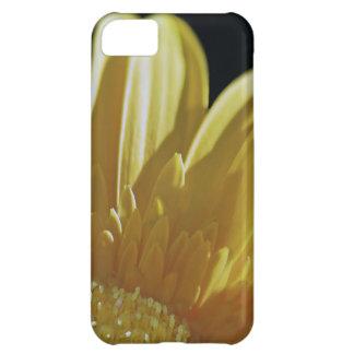 Margarita amarilla del Gerbera Carcasa Para iPhone 5C