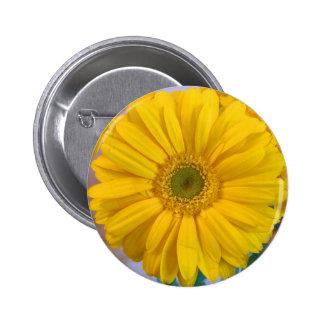 Margarita amarilla del Gerbera Pins