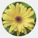 Margarita amarilla etiquetas redondas