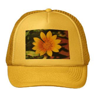 Margarita amarilla gorra