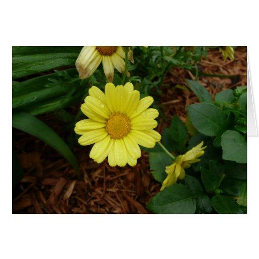 Margarita amarilla tarjeta de felicitación