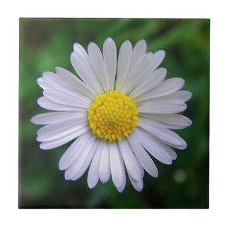Margarita amarillo-blanca brillante teja