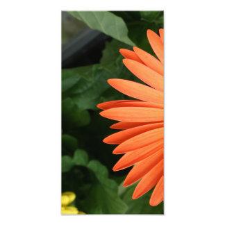 margarita anaranjada del gerbera (1 de 3) fotografías