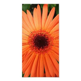 margarita anaranjada del gerbera (2 de 3) impresión fotográfica