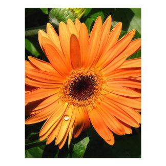 Margarita anaranjada del Gerbera