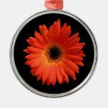 Margarita anaranjada hermosa del Gerbera Adornos