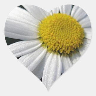 Margarita blanca de centro de la floración colcomanias corazon personalizadas