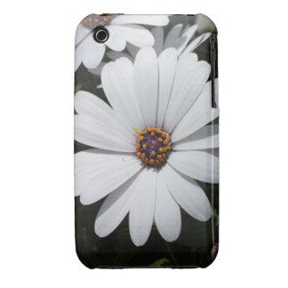Margarita blanca en la floración iPhone 3 Case-Mate cobertura