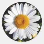 margarita blanca etiquetas redondas