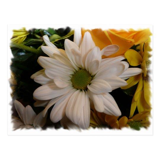 margarita blanca tarjetas postales