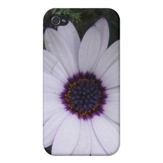 Margarita blanca y púrpura iPhone 4 cárcasas