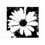 Margarita blanco y negro tarjeta postal