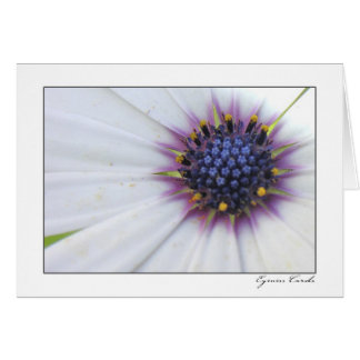Margarita de centro púrpura tarjeta de felicitación