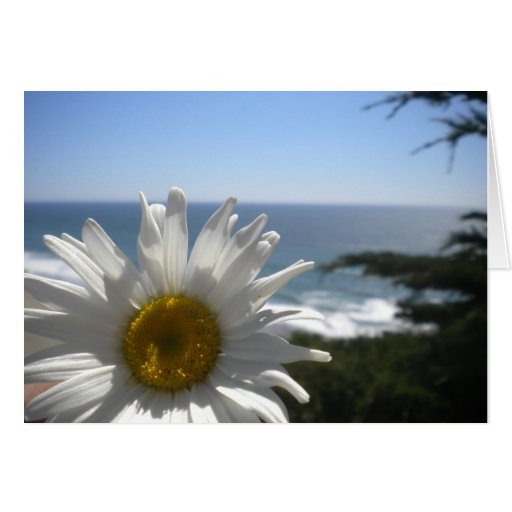 Margarita de la playa del océano tarjeta pequeña