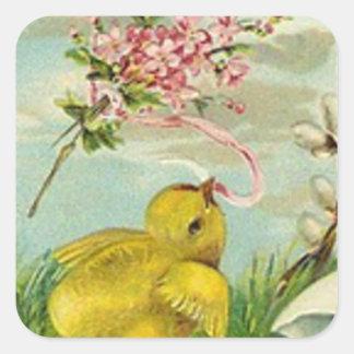 Margarita del rosa del algodón del polluelo de calcomanía cuadrada