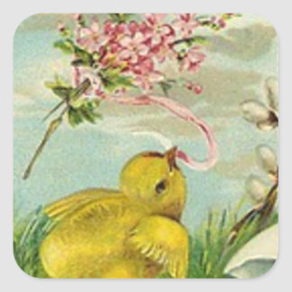 Margarita del rosa del algodón del polluelo de pegatina cuadrada