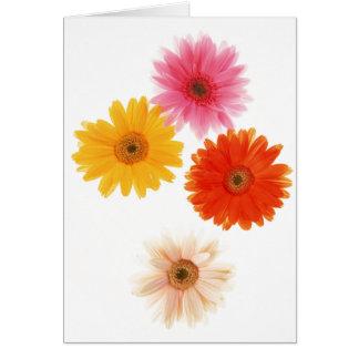 Margarita flotante de la flor de la impresión de tarjeta pequeña