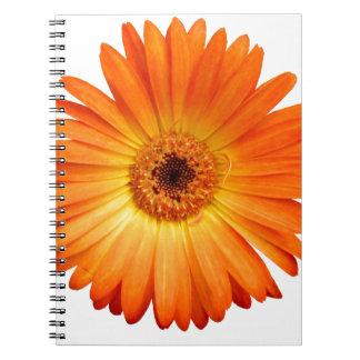 Margarita hermosa del Gerbera del naranja y del Cuadernos