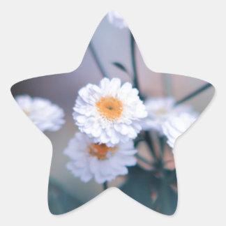 Margarita loca pegatina en forma de estrella