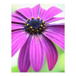 """Margarita púrpura adaptable folleto 8.5"""" x 11"""""""