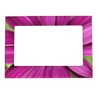 Margarita púrpura floral marcos magnéticos de fotos
