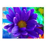 Margarita púrpura postales