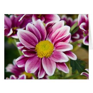 Margarita púrpura felicitación
