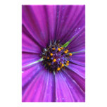 Margarita púrpura vibrante papeleria de diseño